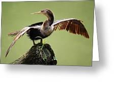 Anhinga In The Marsh Greeting Card by Paulette Thomas