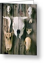 Animal Skulls Greeting Card by Garry Gay