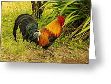 Another Rooster Greeting Card by John  Greaves