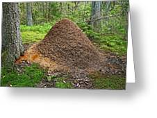 Ant Hill Greeting Card by Bjorn Svensson