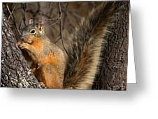 Apache Fox Squirrel Greeting Card by David Salter