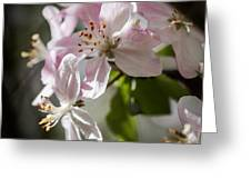 Apple Blossom Greeting Card by Ralf Kaiser