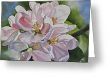 Apple Blossoms Greeting Card by Sharon Freeman