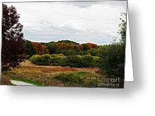 Apple Orchard Gone Wild Greeting Card by Barbara McMahon