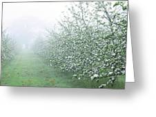 Apple Orchard Greeting Card by Jeremy Walker