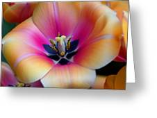 Apricot Or Not Greeting Card by Dick Jones