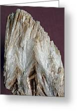 Aragonite Crystals Greeting Card by Dirk Wiersma