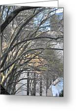 Arched Trees Greeting Card by Kimberly Perry