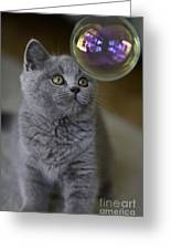 Archie With Bubble Greeting Card by Sheila Smart