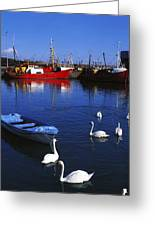 Ardglass, Co Down, Ireland Swans Near Greeting Card by The Irish Image Collection