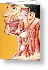 Artwork Of Mouth/neck: Tumour, Cyst, Duct Calculus Greeting Card by John Bavosi