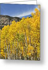 Aspen 7 Greeting Card by Marty Koch