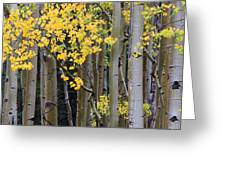Aspen Gold Greeting Card by Adam Pender