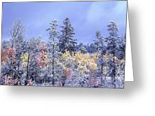 Aspens In Fall With Snow, Near 100 Mile Greeting Card by David Nunuk