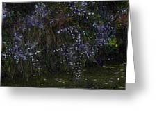 Aster Days Greeting Card by Ron Jones