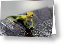 Attitudinous Anole Greeting Card by Theresa Willingham