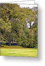 Audubon Park 2 Greeting Card by Steve Harrington