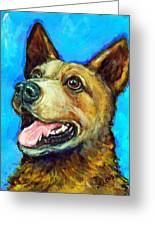 Australian Cattle Dog   Red Heeler  On Blue Greeting Card by Dottie Dracos