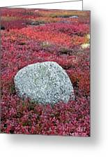 Autumn Blueberry Field Greeting Card by John Greim