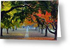 Autumn Canopy Greeting Card by Lisa Phillips