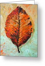 Autumn Colors Greeting Card by Chris Steinken