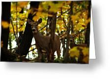 Autumn Doe Greeting Card by Scott Hovind