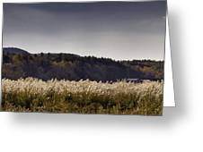 Autumn Grasses - North Carolina Autumn Scene Greeting Card by Rob Travis