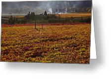 Autumn In Napa Valley Greeting Card by Garry Gay