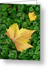 Autumn Just Began Greeting Card by Philippe Taka