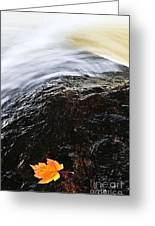 Autumn Leaf On River Rock Greeting Card by Elena Elisseeva