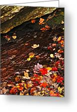 Autumn Leaves In River Greeting Card by Elena Elisseeva