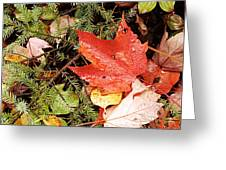 Autumn Leaves Greeting Card by Larry Ricker