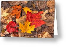Autumn Leaves Greeting Card by Matt Dobson