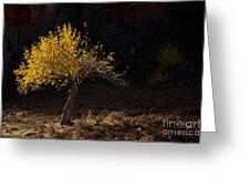 Autumn Light Greeting Card by Mike  Dawson