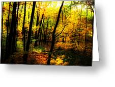 Autumn Light Greeting Card by William Carroll