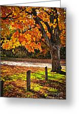 Autumn Maple Tree Near Road Greeting Card by Elena Elisseeva