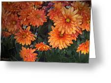 Autumn Orange Flowers Greeting Card by Mikki Cucuzzo