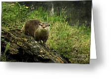 Autumn Otter Greeting Card by Roy  McPeak