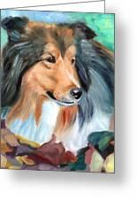 Autumn - Shetland Sheepdog Greeting Card by Lyn Cook