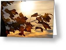 Autumn Splendor Greeting Card by Bill Cannon