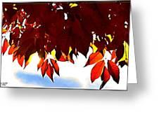Autumn Sun Glory Greeting Card by Danielle  Parent