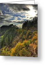 Autumn Sunlight Greeting Card by Tyra  OBryant