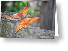 Autumn - The Year's Loveliest Smile Greeting Card by Christine Till