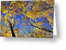 Autumn Treetops Greeting Card by Elena Elisseeva