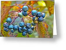 Autumn Viburnum Berries Series #4 Greeting Card by Mother Nature