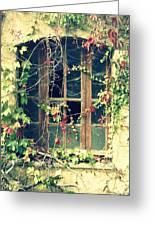 Autumn Vines Across A Window Greeting Card by Georgia Fowler