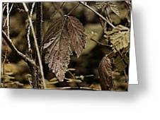 Autumn Whispers Greeting Card by Bonnie Bruno