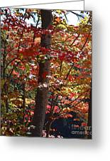 Autumn's Delight Greeting Card by Diane E Berry