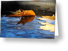 Autumn's Reflection Greeting Card by Jai Johnson