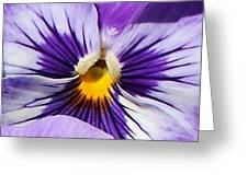 Awakening Pansy Greeting Card by Bruce Bley